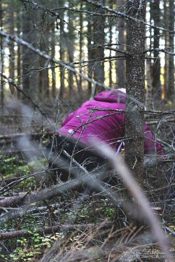 Plockare i skogenj
