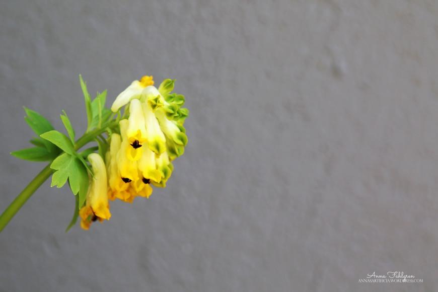 blomma mot vägg
