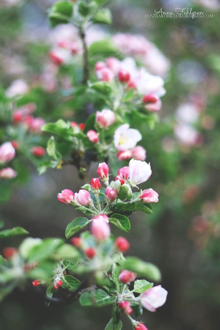 Garden appels