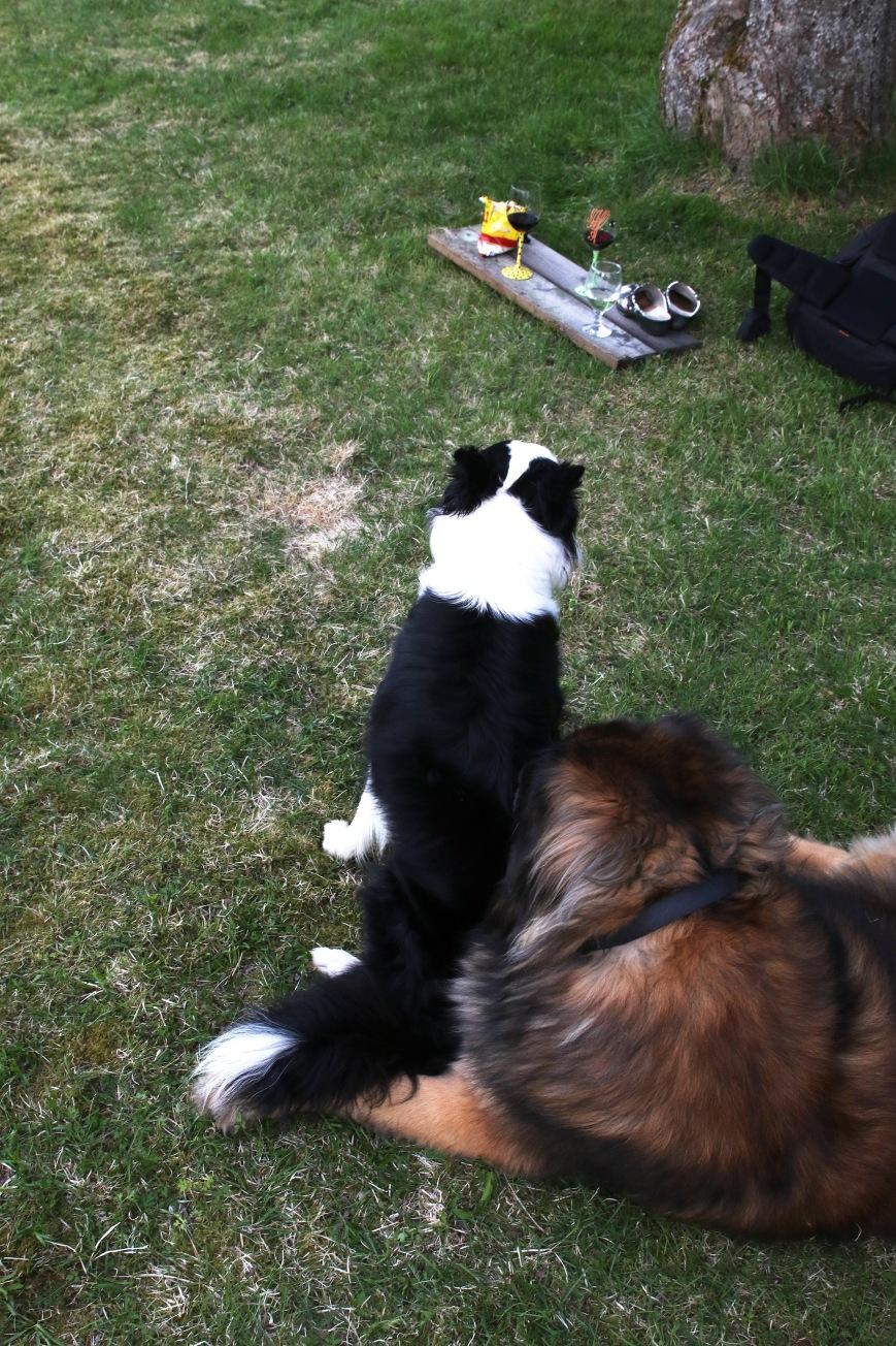 Hundarna