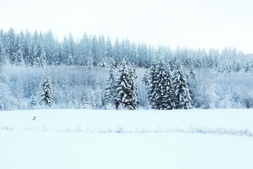 wintermorning